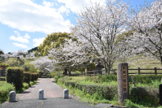 和泉式部公園 桜