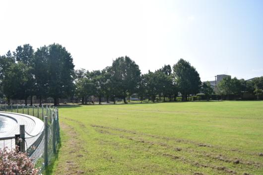 北公園 芝生